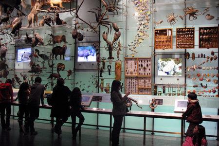 מוזיאון ההיסטוריה של הטבע